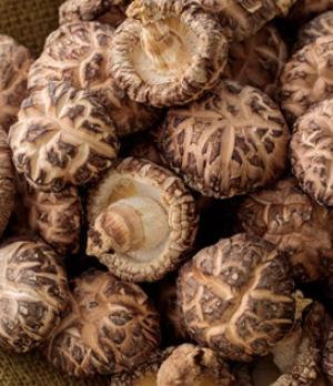 有機原木椎茸 冬菇